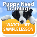 Puppy need training? Watch free sample lesson!